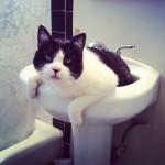 Eddie Cat Halen