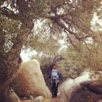 A Woman Wanderer
