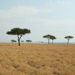 AFRICA, PT. 3 – Just Call Me Serengeti Jones